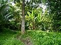 Limbang, Sarawak, Malaysia - panoramio (4).jpg