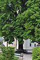 Linde Stiftsplatz Mattsee 3.JPG
