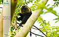 Lion Tailed Macaque.jpg
