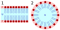 Lipid bilayer and micelle svg.png