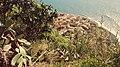 Little shade at Jardim do Mar (26008658787).jpg