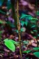Lizard on a branch.jpg