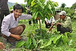 Local populations benefit from new cocoa crop techniques and market access. (5715038609).jpg