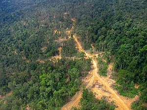 Borneo - Logging road in East Kalimantan, Indonesia.