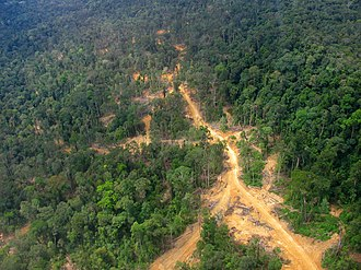 East Kalimantan - Logging road in East Kalimantan: logged forest on the left, primary forest on the right