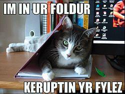 Lolcat in folder.jpg