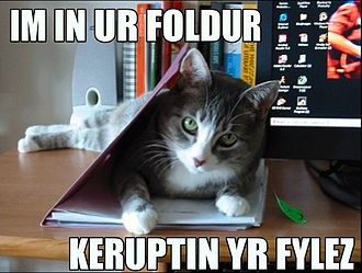 "Lolcat - A lolcat image using the ""I'm in ur..."" format"