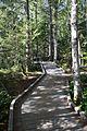 MRNP — Kautz Creek Trail (21866198452) (2).jpg