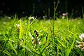 Macro Flowers (18229164151).jpg