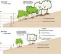 Macrotidal versus microtidal sea level rise relocation of mangroves.webp