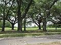 Magazine Street through Audubon Park, New Orleans, 29 June 2020 01.jpg