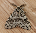 Male black arches (42999191154).png