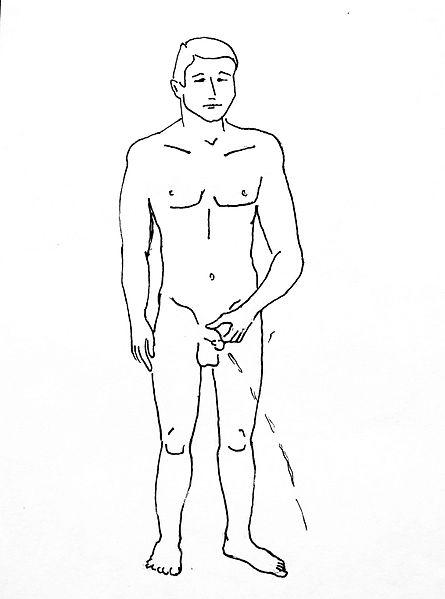 File:Male urination - on white - 2.jpg
