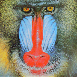 Mandrill-k-means.png