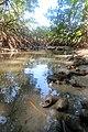 Mangrove ecosystem Andaman islands.jpg