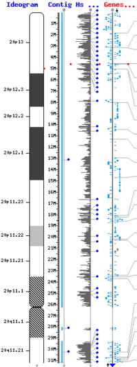 Mapa del brazo corto del cromosoma 20. El punto rojo señala la localización del gen PRNP.