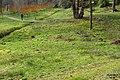 Massed daffodils (WGP) (33009508940).jpg