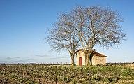 Mazet in vineyards, Mèze cf01.jpg