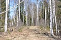Mežs, Smārdes pagasts, Engures novads, Latvia - panoramio.jpg