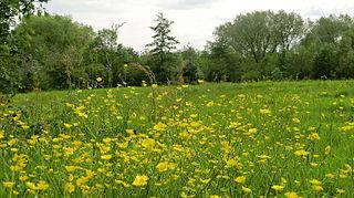 Broadhurst Park (public park)