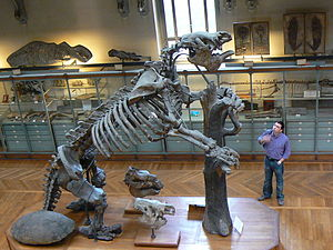 Skelettrekonstruktion von Megatherium americanum im Muséum national d'histoire naturelle in Paris