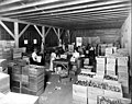 Men and women packing apples into Wright Fruit Co boxes, North Yakima, ca 1910s (INDOCC 1353).jpg