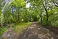 Metsätiellä rengasvaraston maastossa - panoramio.jpg