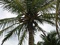 Mexico yucatan - panoramio - brunobarbato (103).jpg