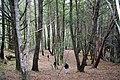 Miller Forest 04 09 08 054 (18314827814).jpg