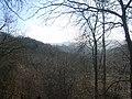 Millington Woods - panoramio (2).jpg