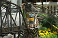 Model Train @ Bellagio Conservatory and Botanical Gardens (2597912436).jpg