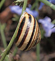 Mollusc shell.jpg