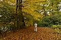 Mon meilleur ami sous un arbre doré (22232061504).jpg