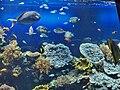 Monaco.Musée océanographique017.jpg