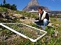 Monitoring alpine vegetation at Logan Pass (4428163158).jpg