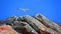 Morro Rock (16912980994).jpg