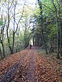 Moselle bike trail in Pommerheld Nature Reserve near Pommern, Germany - panoramio.jpg