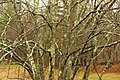 Mossy Tree At The Nature Center (137974773).jpeg