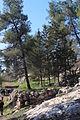 Mount Eitan IMG 2646.JPG
