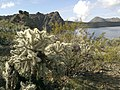 Mt. Pinter Base Loop, Tonto National Forest, Butcher Jones Trail, Fort McDowell, AZ 85264, USA - panoramio (20).jpg