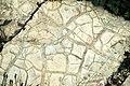 Mudcracks (Belt Supergroup, Mesoproterozoic; Logan Pass, Glacier National Park, Montana, USA) 1.jpg