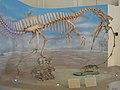 Museu Nacional - UFRJ - Exp 2.jpg