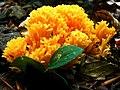 Mushroom-yedigoller-07630 nevit.JPG