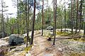 Muuratsalo - trail on rock.jpg