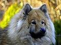 My pet - Flickr - Stiller Beobachter.jpg
