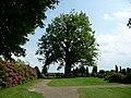 Naturdenkmal Linde Neuenkirchen Melle -Am Anfang des Friedhofs- Datei 1.jpg