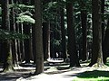 Nature Park Scene - Manali - Himachal Pradesh - India (26614878095).jpg