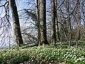 Naturschutzgebiet Görslower Ufer bei Raben Steinfeld.jpg