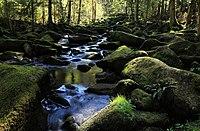 Naturschutzgebiet Saußbachklamm Waldkirchen Dr. Fritz Haselbeck.jpg