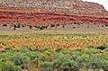 Navajo Corn, Cameron, AZ 9-15a (21626828698).jpg